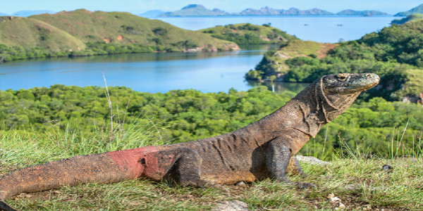 Paket Tour 3 Day 2 Night  Beautiful KOMODO+Labuan Bajo
