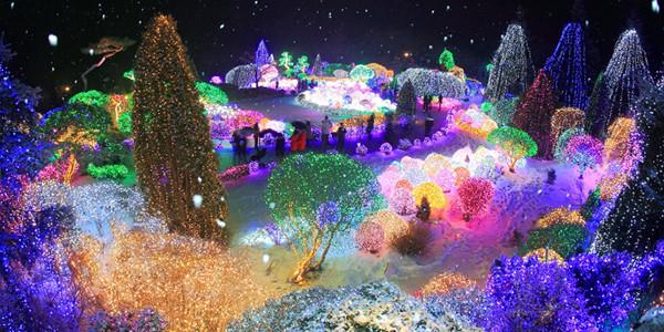3N5D LOVELY WINTER KOREA + LIGHTING FESTIVAL